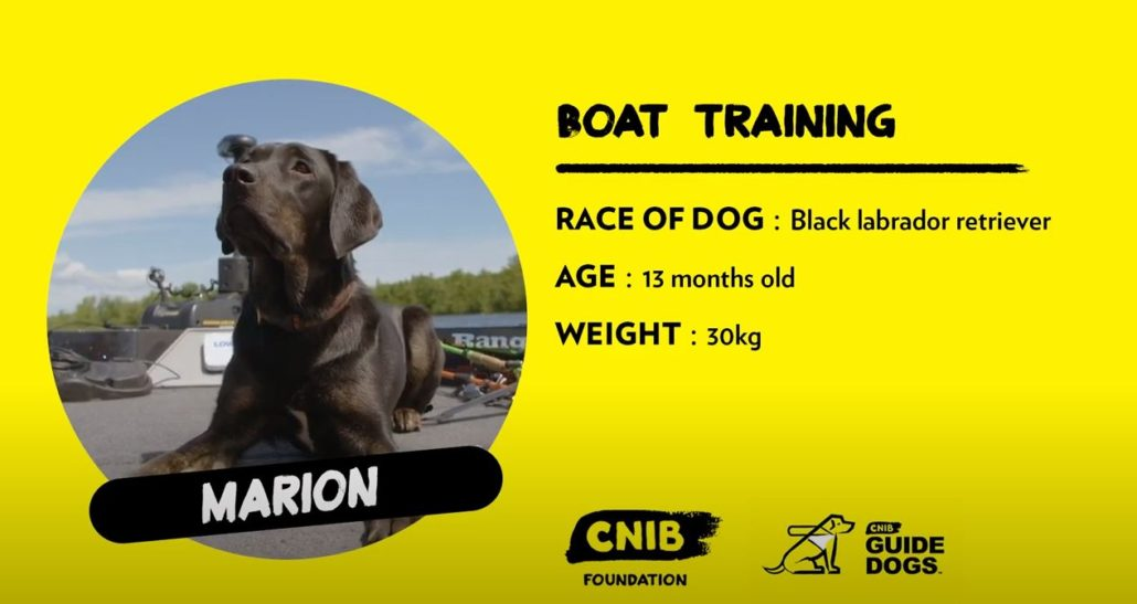 Guide Dog - Marion